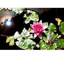Sun and Lotus Photographic Print