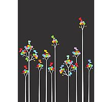 Colorful Tweet Birds On White Branches Photographic Print