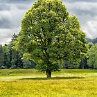 The Lone Tree by M.S. Photography & Art