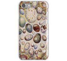 Vintage Bird Egg Drawings iPhone Case/Skin