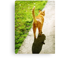 Cat Butt Canvas Print