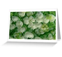 lilies of the valley background Greeting Card