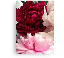 flowers peonies Canvas Print