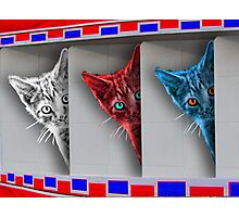Patriotic Kittens Photographic Print