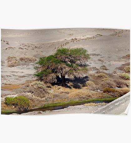 Tree in the Atacama Desert Poster