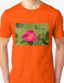 Pink Garden Rose Unisex T-Shirt