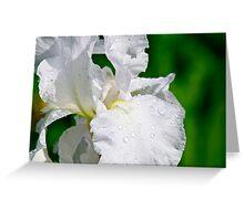 White Iris 2 Greeting Card