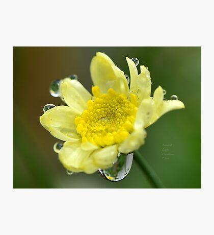 """"""" Lemon Drops """" Photographic Print"""
