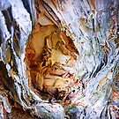 Paper Bark Tree - backyard by EdsMum