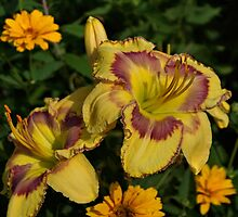 Daylily and Zinnia by Sandy Keeton