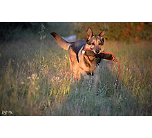 Fetch Zeus by Byron Croft, Croft Photography Photographic Print