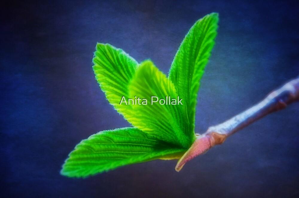 Vivacious Viburnum Leaves by Anita Pollak
