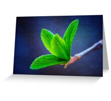 Vivacious Viburnum Leaves Greeting Card