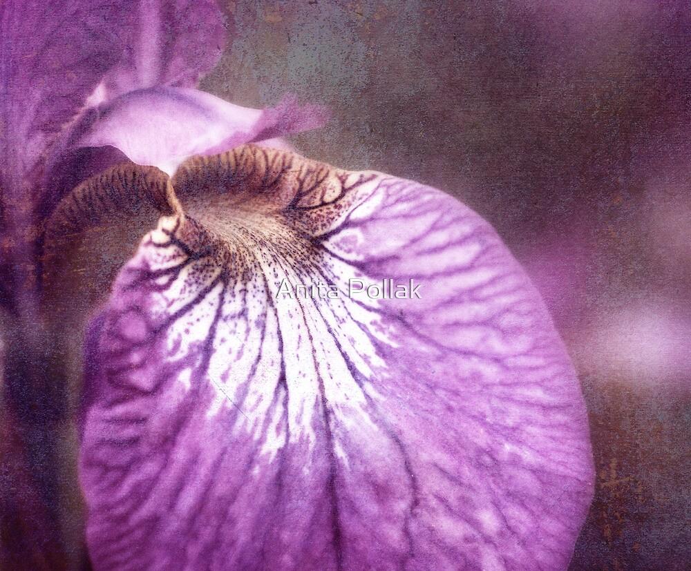 Grunge Iris by Anita Pollak