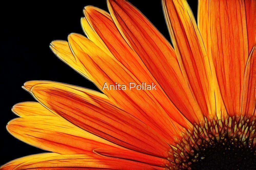 Fractalius Daisy by Anita Pollak