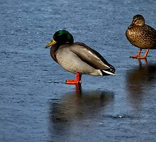 On Thin Ice by Lee  Gill