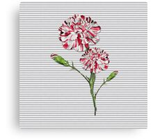Candy Striped Carnation Canvas Print