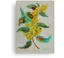 Wattle blooms Canvas Print