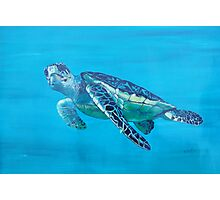 Sea Turtle Photographic Print