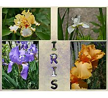 Iris Montage or Collage Photographic Print