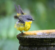Happy Bird Bathing by byronbackyard