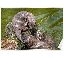 Asian Otters at Escot, Devon UK Poster