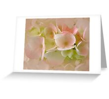 The Delicate Hydrangea Greeting Card