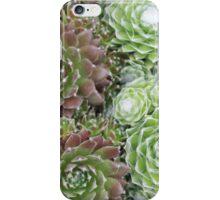 Succulent 4 iPhone Case/Skin