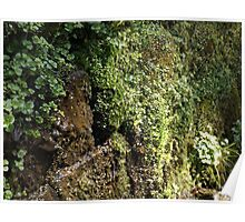 Mossy Wall Poster