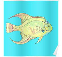 Angel Fish on blue Poster