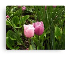 Tulips in love Canvas Print