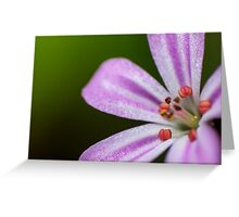 small pink flower Roberts herb Greeting Card