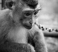 waiting monkey (black & white) by Martin Pot