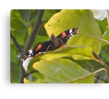 Red admiral butterfly smile Canvas Print