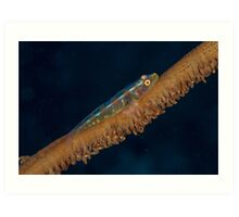 Wire Coral Goby Art Print