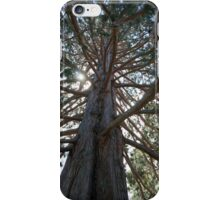 Redwood Branches iPhone Case/Skin