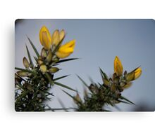 Thorny bush brush Canvas Print
