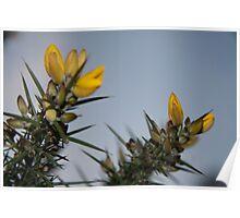 Thorny bush brush Poster