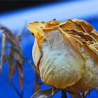 Dry Flower 3 by Chet  King