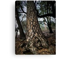 Aging Tree Canvas Print