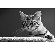 Curious Tabby Cat Gazes at Camera Photographic Print
