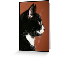 Handsome Tuxedo Cat Poses for Portrait Greeting Card