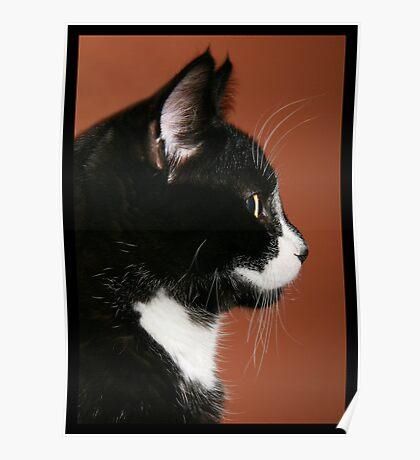 Handsome Tuxedo Cat Poses for Portrait Poster