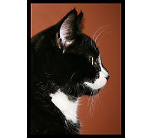 Handsome Tuxedo Cat Poses for Portrait Photographic Print