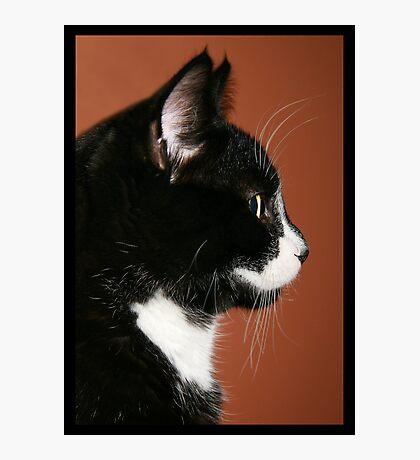 Handsome Tuxedo Cat Poses for Portrait Photographic Print