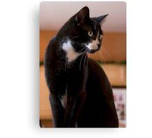 Elegant Tuxedo Cat Posing Canvas Print