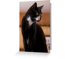 Elegant Tuxedo Cat Posing Greeting Card
