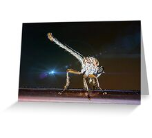 Robber Fly with it's prey- Efferia albibarbis Greeting Card