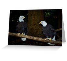 Bald Eagles Greeting Card