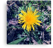 This is a Yellow Flower Canvas Print